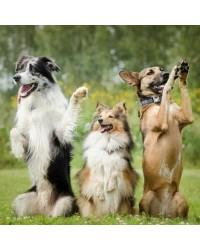 """Дрессировка собак в кинологической ассоциации """"Друг"""""""