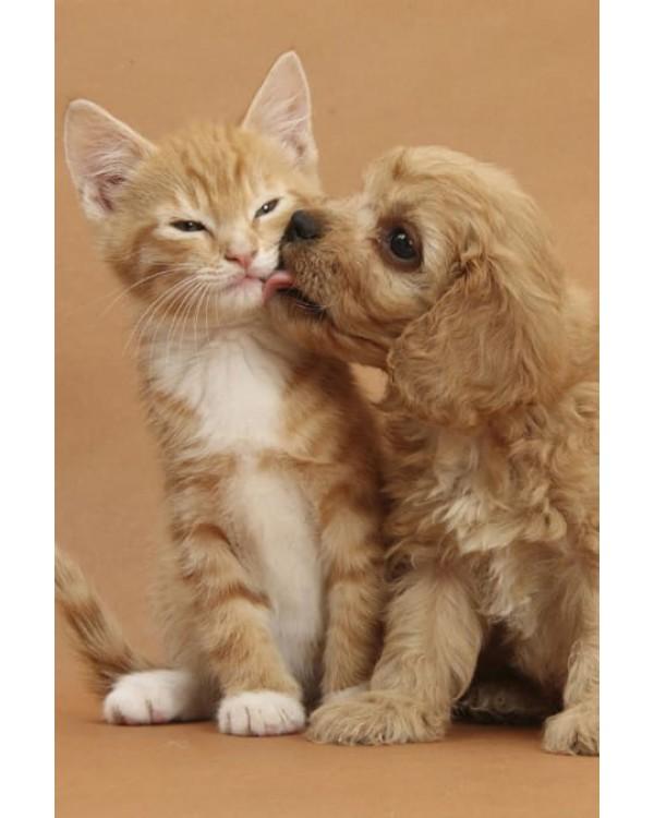 прививки для собак и кошек