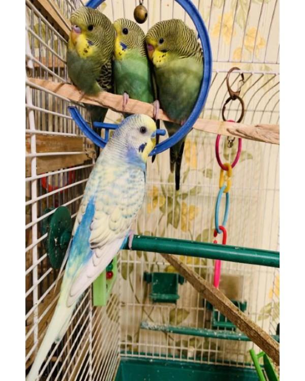 Отель для птиц