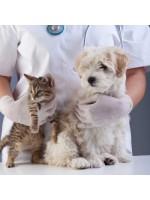 Прививки для собак кошек