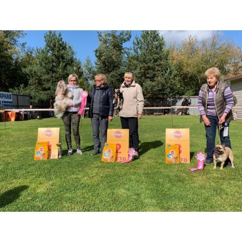 Выставка собак всех пород ранга САС г. Клин «ДРУГ – 2021»